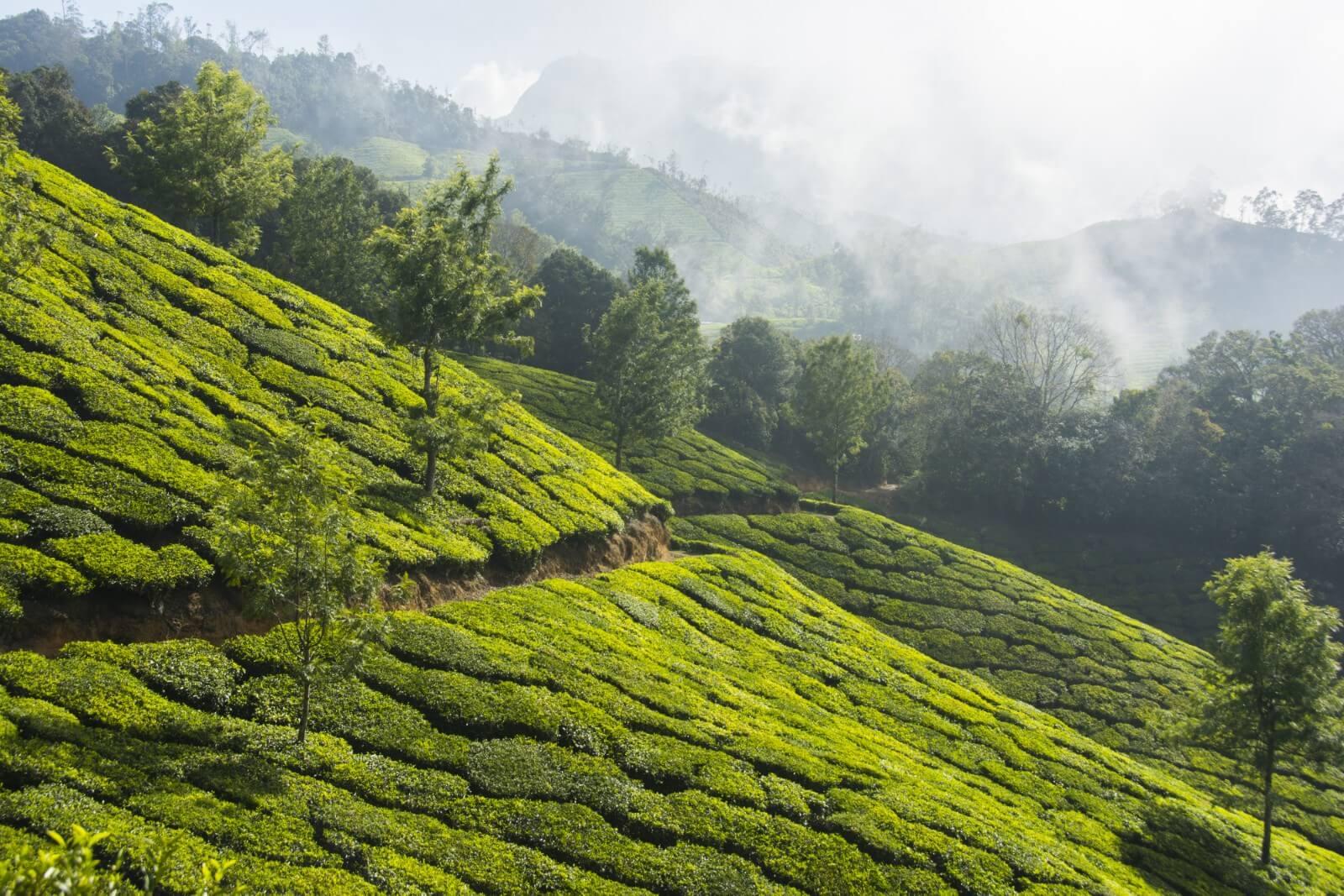 Top 7 destinations to visit in Kerala, India | Trip Night