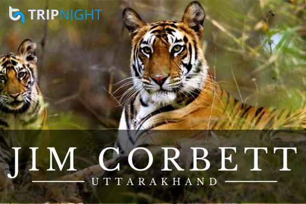 Jim Corbett National Park is one of the oldest national parks in India.